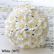 White Cosmo Daisy - 50