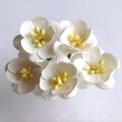 Cherry Blossoms - 50