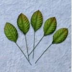 Green Mulberry Leaves - 100