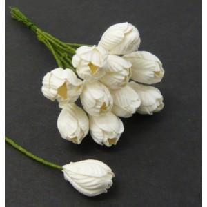 Tulips - 50