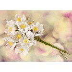 Hello Pastel Flower Stem - White